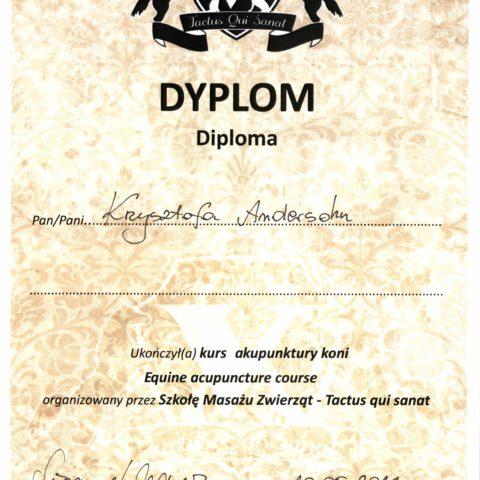 DYPLOM uczestnika szkolenia i warsztatów z akupunktury koni.